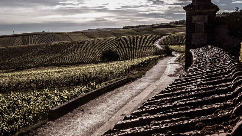 SECLI Weinwelt Champagner Anbaugebiet
