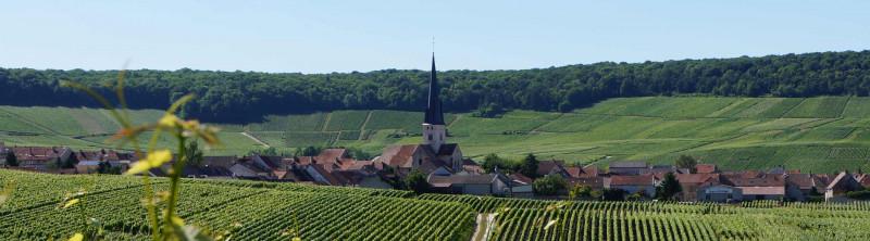 SECLI Weinwelt Weingüter